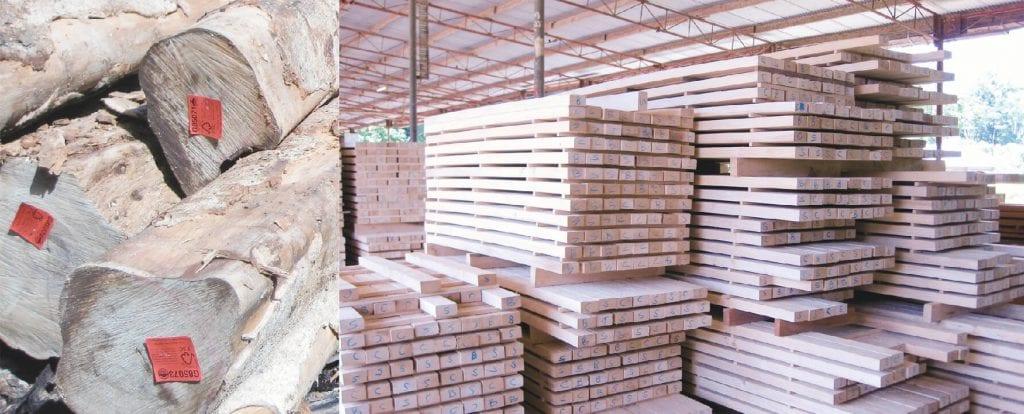 gỗ teak (gỗ giá tỵ)